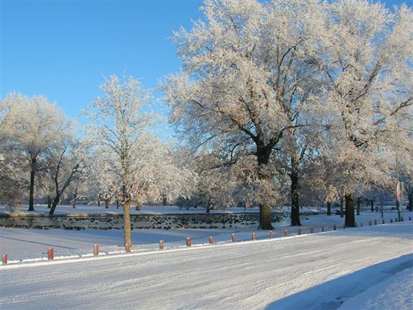 winter in park